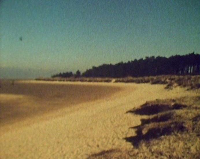 beach-woods1