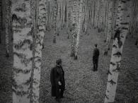 Ivan_Current_Trees
