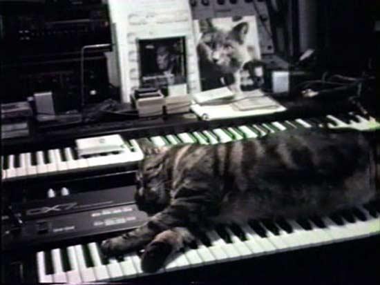 chat-ecoutant-musique20
