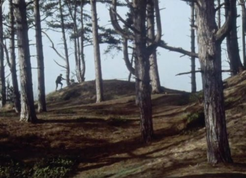 warning-to-the-curious-a-1972-021-holkham-wood-in-the-film
